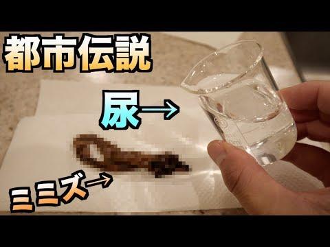 【検証】ミミズにおしっこかけるとち○こ腫れるって本当?