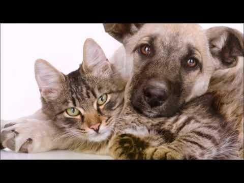 Вопрос: Можно ли примирить кота и собаку Как?