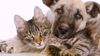 Как подружить кошку с собакой Смешные животные Friendship of a cat and a dog