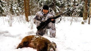Охота на кабана в Орловской области видео