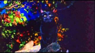 Hocus Pocus- Binx & Max
