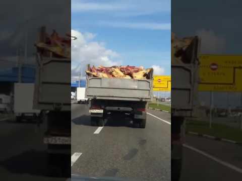 Транспортировка мяса, что попадает на прилавки. Краснодарский край, богатый край, мясо возят так!