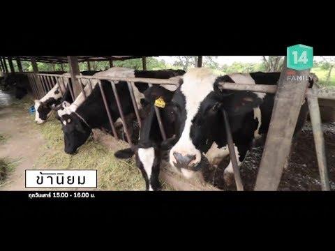 วิชัยฟาร์มเลี้ยงโคนม จ.สระบุรี - วันที่ 21 Jul 2018