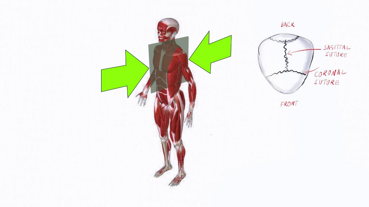Anatomy lecture 1 Planes of the Body - YouTube