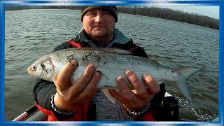 Рыбалка двух блогеров на реке Амур и Болин сети и Спиннинг Один день на реке поздней осенью