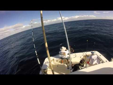 Angler Management Silver Sailfish Highlights 2016