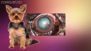 Кератит у собак | Признаки | Виды | Лечение.(, 2016-01-25T18:31:19.000Z)