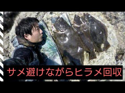 サメに会いまくりながら魚突き 関西お魚突き95(2/2)
