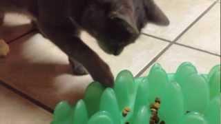 Cat on Northmate Green interactive feeder
