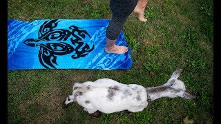 Goat Yoga - Give More 24