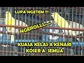 Kenari Kelas A Lomba Kicau Kenari A Di Lapangan Asrama Kicau Angmor Medan  Mp3 - Mp4 Download