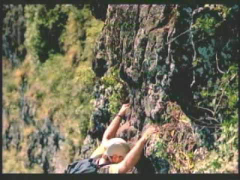 Hawaii - Botanist Steve Perlman pollinates the Alula