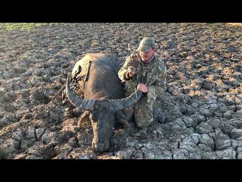 Buffalo Hunting Australia - Bowhunting The NT