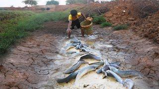 Early Rain Fishing Best Hand Fishing Amazing Boy Catching Many Catfish In Mud Water tyriq 1256