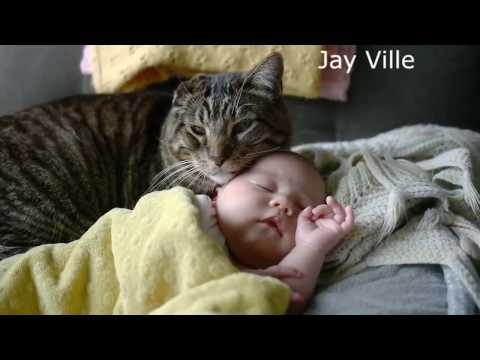 the keeper (cat and baby)