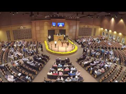 2017 Lexington Selected Yearling Sale
