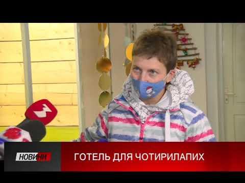 Третя Студія: Вперше в Івано-Франківську створюють готель для котів та маленьких собак