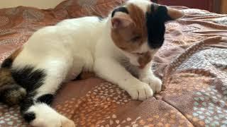 치실하는 고양이 쿠키