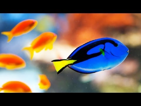 Electrical Cost of a Large Fish Tank   Aquarium Care