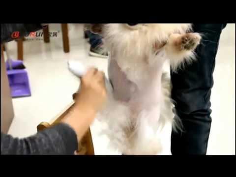 Машинка для стрижки собак, кошек в Новосибирске