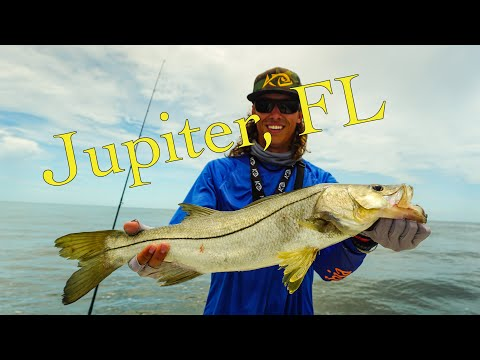 Fishing Jupiter, Florida! 7 SPECIES