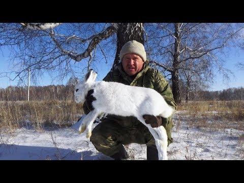 Охота на хитрого зайца беляка!