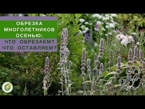 Осенняя обрезка многолетников//Какие растения обрезать на зиму, а какие можно оставить?