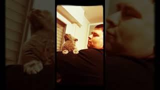 Русская голубая кошка сама нежность