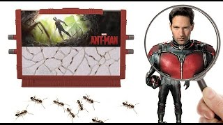 the ant man ant farm concept toy or hobby farm for kids