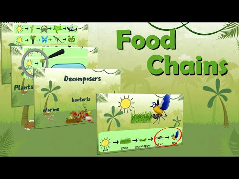 What are Food Chains | Learning Science | EasyTeaching