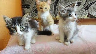 кошка кормит котят, котята пьют молоко