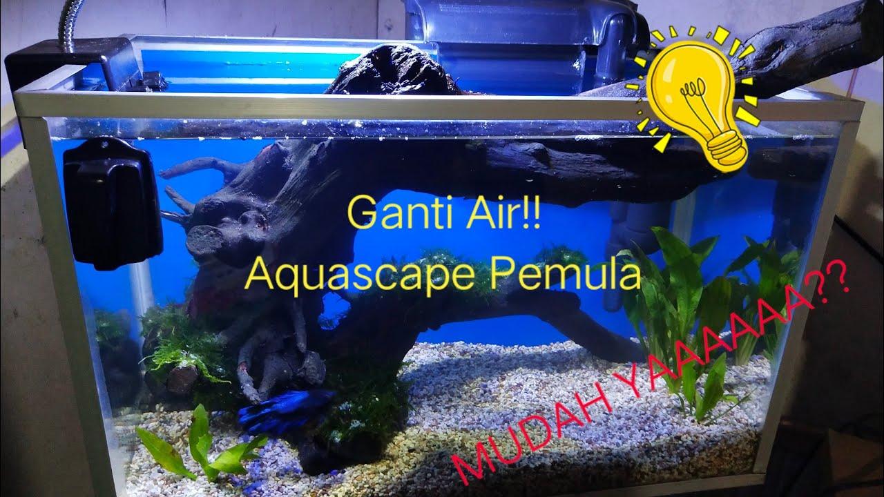 Cara Mudah Mengganti Air Aquascape Pemula !! - YouTube
