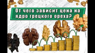 Что влияет на стоимость ядра грецкого ореха? cмотреть видео онлайн бесплатно в высоком качестве - HDVIDEO