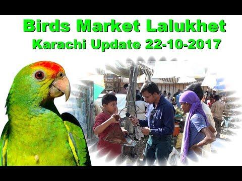 Birds Market Lalukhet Karachi Update 22-10-2017 Jamshed Asmi Informative Channel In (URdu/Hindi)