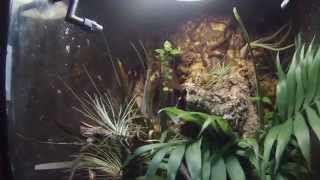 Reptile Room Tour 2015