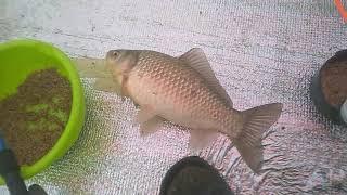 Моя рыбалка на Цымлянском водохранилище