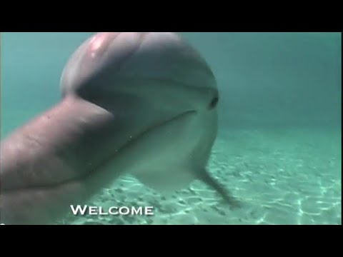 Blue Lagoon Island | Home of Dolphin Encounters Nassau, Bahamas  for cheap