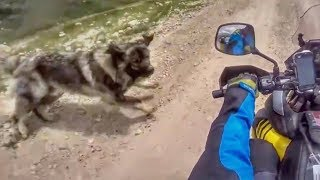 Animals Vs Bikers 2018 - Dogs, Cows, Rabbits & Birds Gone CRAZY!