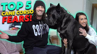 Top 5 Cane Corso FEARS When Getting One