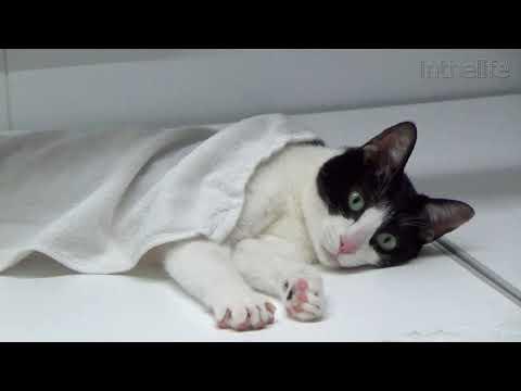 岩盤浴風にお風呂を楽しむ猫  Moo The Cat Enjoy Ganbanyoku (Bedrock Bath)