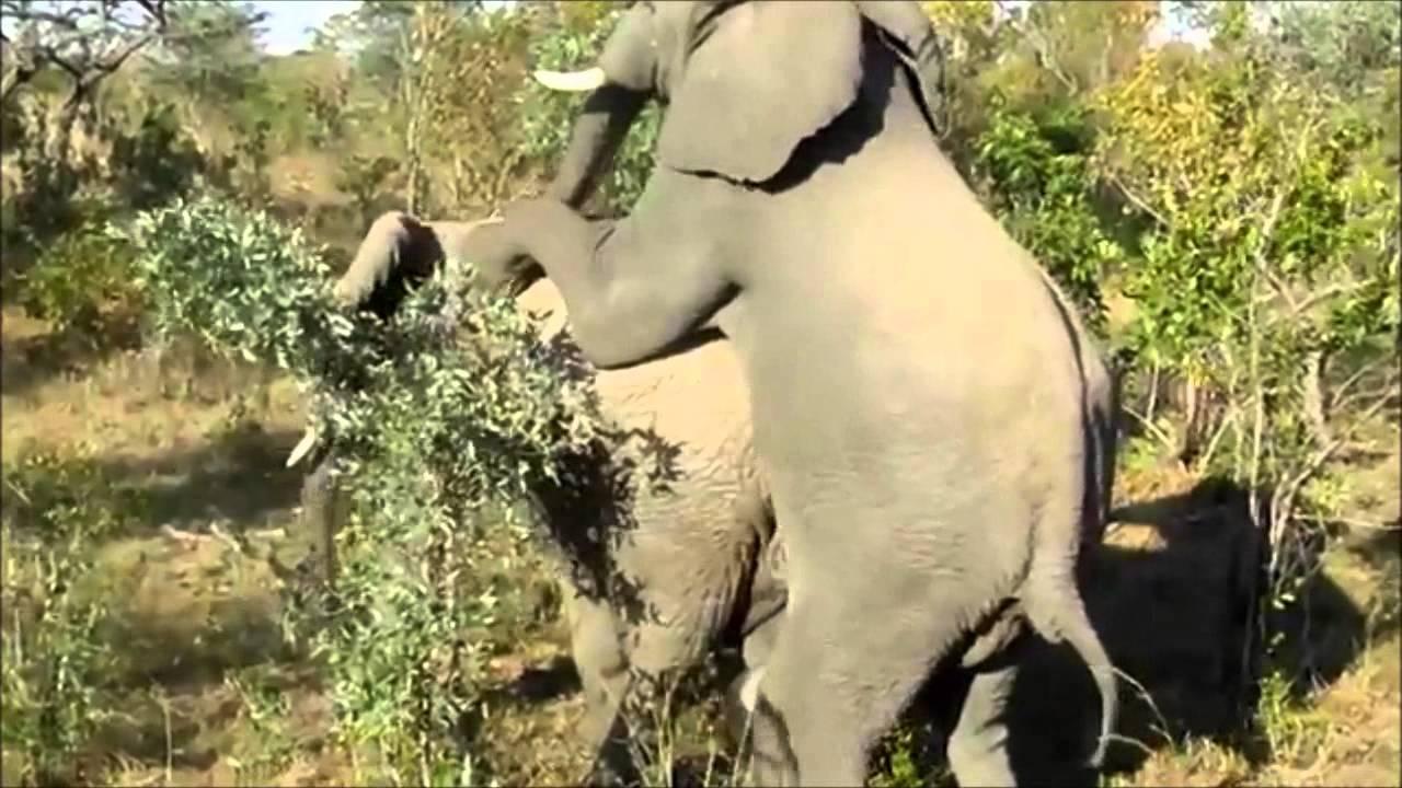 Elephant tube gay