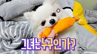 ENG SUB _ You can see Pomeranian Hangseong's Dog-like Aspects Here.
