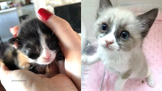 Rescue Super Cute Kittens were Abandoned by There Mom Cat and Not Being Properly Care For
