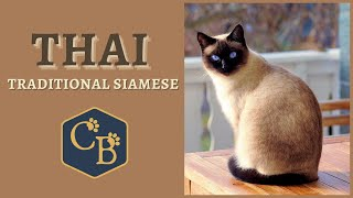 The Thai Cat or (traditional Siamese)