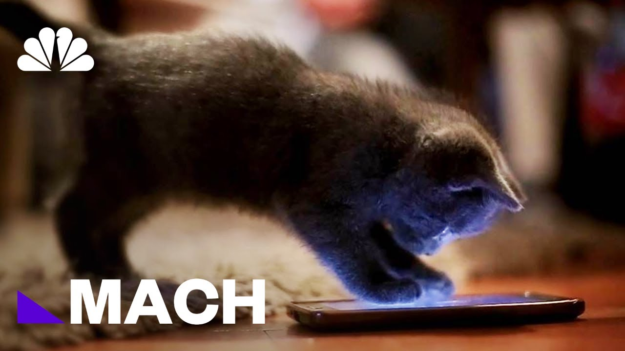 Interspecies Internet Wants To Give The Animal Kingdom The Power Of Communication   Mach   NBC News