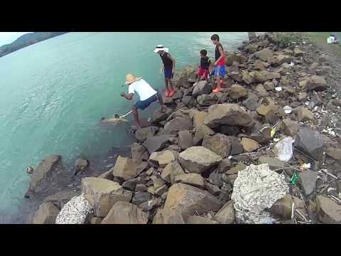 Pesca En El Canal De Panama Mr.Brown