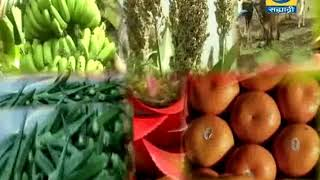 Video Amchi Mati Amchi Manse - 07 February 2018 - अल्पभूधारक शेतकऱ्यांसाठी एकात्मिक शेती मॉडेल download MP3, 3GP, MP4, WEBM, AVI, FLV Agustus 2018