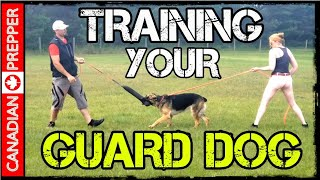 Guard Dogs for Survival and Preparedness: Q & A with Professional Trainers