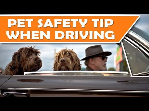 Driving with Dog Cat Safety Seat Belt Harness - Pet Travel Tip