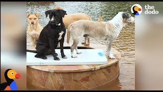 Family Braves Hurricane Harvey For Their 14 Rescue Dogs | The Dodo thumbnail